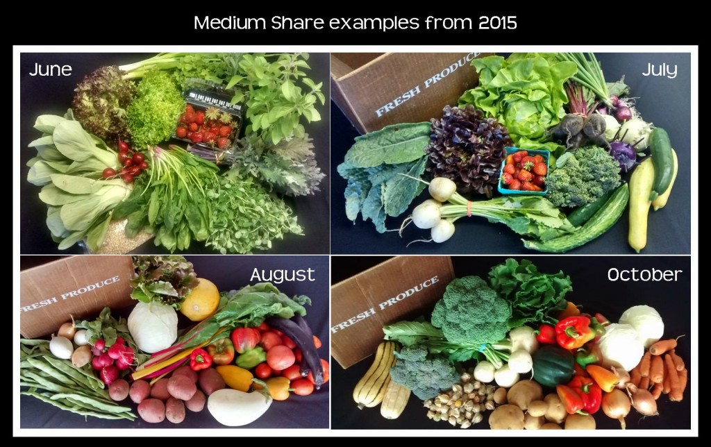 Medium Share examples 2015